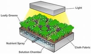 Five Innovative Vertical Farming Ideas