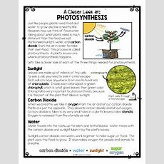Differentiated Photosynthesis Reading Passage & Photosynthesis Activities