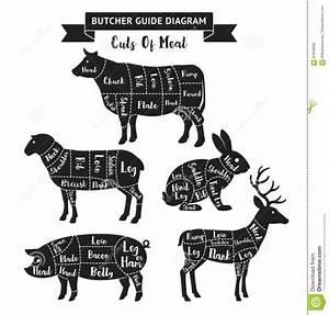 Pin On Deer Butchering