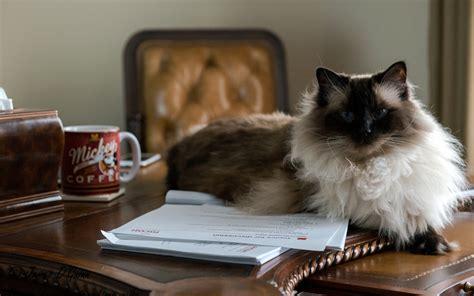 animali in ufficio uffici friendly al lavoro con il animali pucciosi