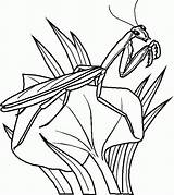 Coloring Insects Popular sketch template