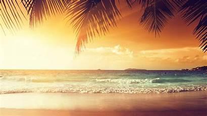 4k Sunset Tropical Beach Palm Trees Uhd