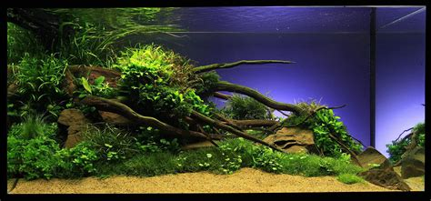Planted Aquascape by Marcel Dykierek And Aquascaping Aqua Rebell
