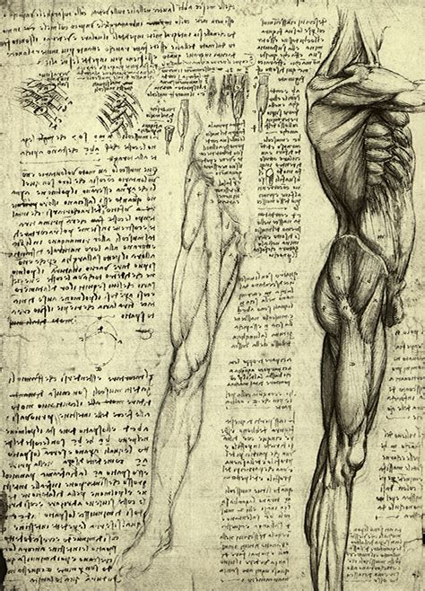 anatomy archives  graffical muse
