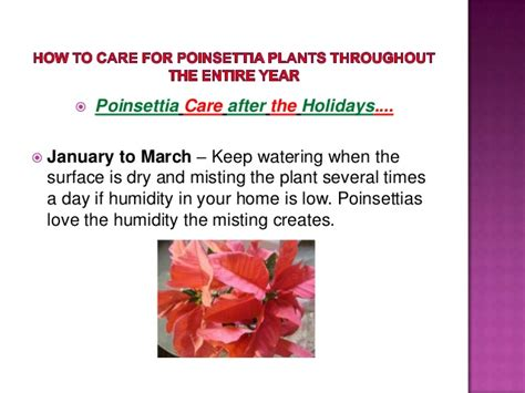 how to care for poinsettia how to care for poinsettia plants throughout the entire year