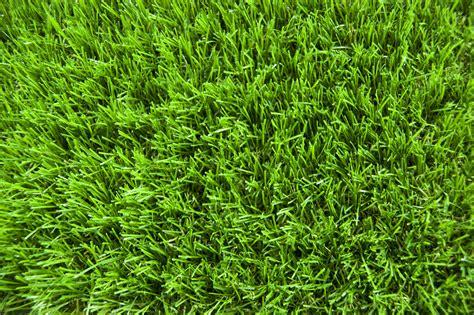 of grass earth grass wallpapers desktop phone tablet awesome desktop awesome wallpapers
