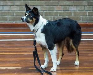 puppy training classes glasgow at bearsden dog training With dog training courses