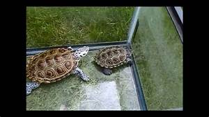 General Turtle Care  How Much Space Does Your Turtle Need