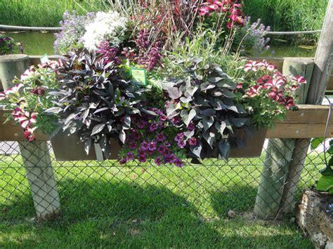 Plante De Jardinière by Plante Jardini 232 Re Et Vasque Barthel Fleurs