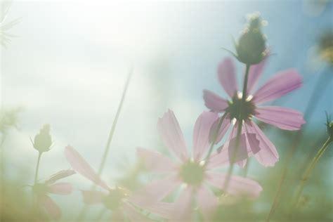 blumen bilder hintergrund kostenloses foto blumen sun licht blume kostenloses
