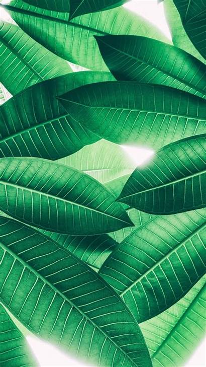 Iphone Plus Wallpapers Pretty Super Tropical