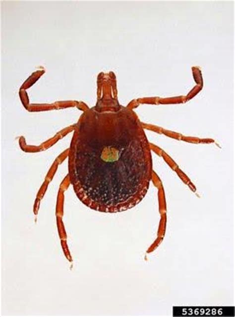 fighting ticks  fire  health benefit  forest