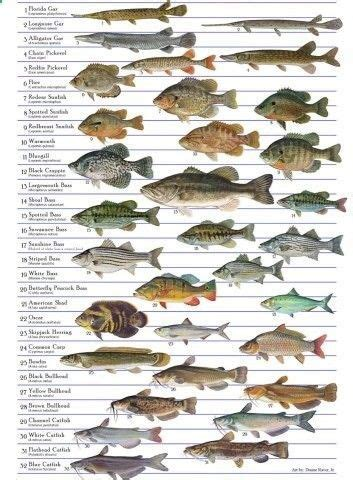 species  fish  suitable  aquaculture