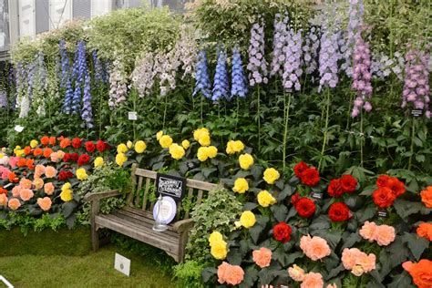 pertunjukan bunga chelsea flower show london panduan