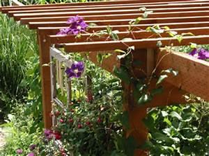 Plantes Grimpantes Pot Pour Terrasse : choisir une plante grimpante ~ Premium-room.com Idées de Décoration