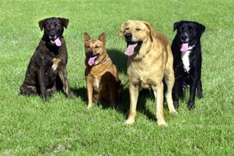 common dog rashes pets