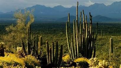 Cactus Arizona Landscape Monument Wallpapers National Monuments