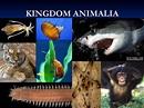 Animalia - O Meu Site