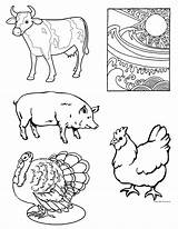 Coloring Meat Pages Protein Preschool Animals Chicken Printable Harvest Week Getcolorings Luxury sketch template