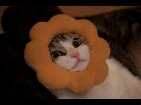 cats  stuck   compilation collegehumor post