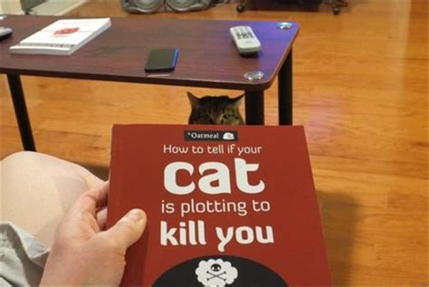 how to tell if a cat is or how to tell if your cat is trying to kill you dump a day