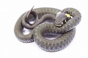Große Reptilien Für Zuhause : reptilien kleintierpraxis l neburg ~ Lizthompson.info Haus und Dekorationen