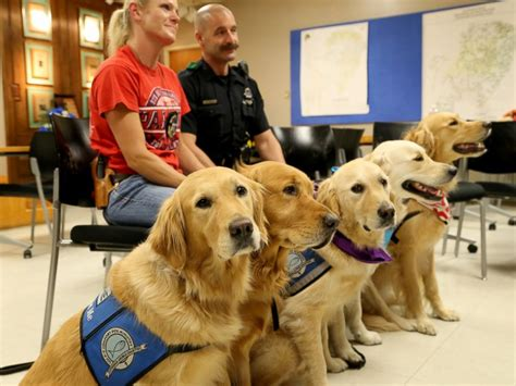 lcc comfort dogs comfort dogs travel to dallas to provide support to slain
