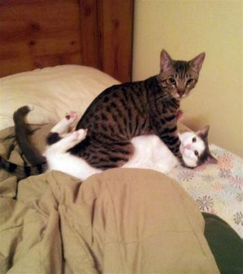 Pets Making Human Like Funny Face Expressions Photo Gallery