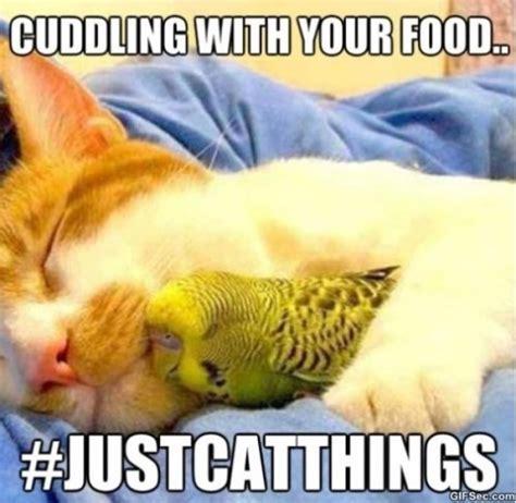 Food Meme - funny food memes tumblr