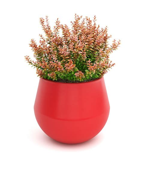planter citronnier en pot planter