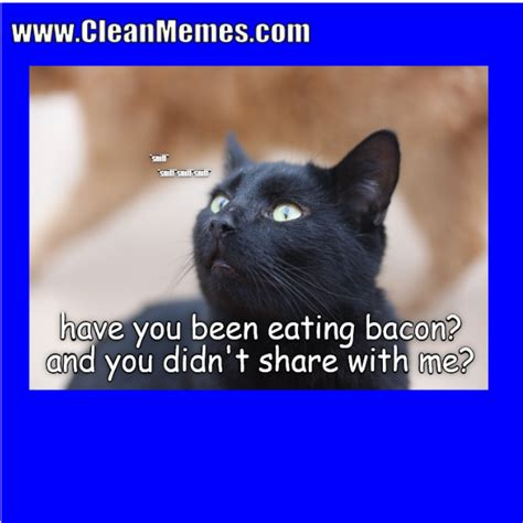 Cat Memes Clean - clean cat memes www imgkid com the image kid has it