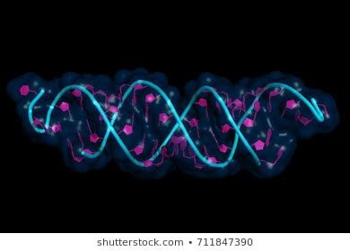 rna images stock  vectors shutterstock