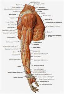 Sore Shoulder Muscles