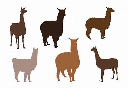 Alpaca Vector Silhouettes Silhouette Vectors Vecteezy Gratis