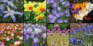 Planter Des Bulbes : l abc de la plantation des bulbes jardinerie riera ~ Dallasstarsshop.com Idées de Décoration