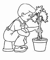 Tree Cartoon Drawing Clipart Coloring Trees Plant Arbor Plantation Getdrawings Pdf Library Palm sketch template