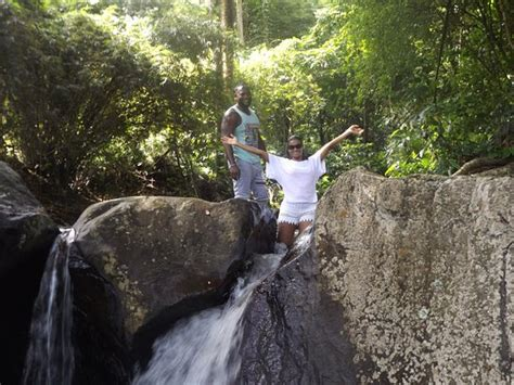 Bamboo Adventures Svg (kingstown)