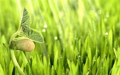 Plant Plants Nature Wallpapers Desktop Resolution