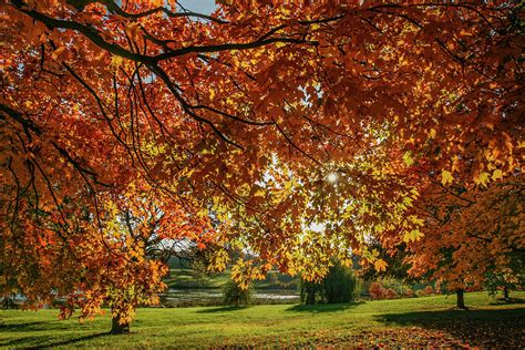 Autumn At The In Forest Park St Louis Missouri Photograph