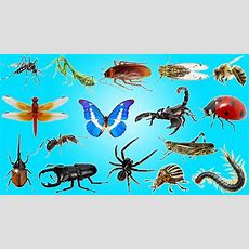 Bugs And Insects For Kindergarten, Preschool And Junior Kids Youtube