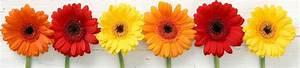Blumen Bewässern Mit Wollfaden : blumen engel in detmold ~ Lizthompson.info Haus und Dekorationen