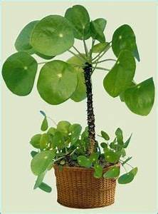 Pilea Pflanze Kaufen : why reusable bags are better for you and the world ~ Michelbontemps.com Haus und Dekorationen