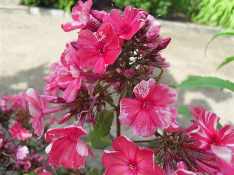 Winterharte Pflanzen Balkonkästen by Welche Blumen Jetzt Pflanzen Welche Blumen Pflanzen