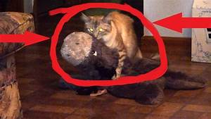 Cat Scratch Fever  Must See