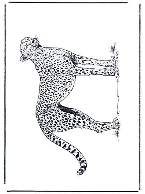 cheetah coloring pages    print