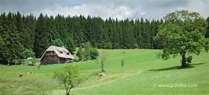 Schwarzwald Kuckucksuhr Modern : schwarzwald auf den spuren der kuckucksuhr ~ Sanjose-hotels-ca.com Haus und Dekorationen