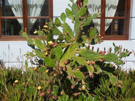 Pilze Im Garten Pflanzen by Im Garten Foto Bild Pflanzen Pilze Flechten