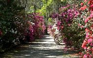 Most Beautiful Gardens in America