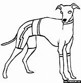 Greyhound Coloring Pages Dogs Italian Whippet Colouring Dog Greyhounds Template Thecolor Sketch Line sketch template