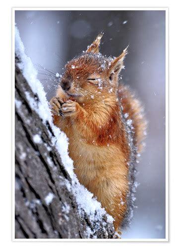 ervin kobakci eichhoernchen im winter poster